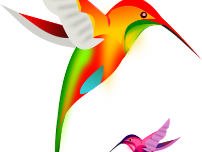 "Google Unleashed the ""Hummingbird"" Algorithm Update"